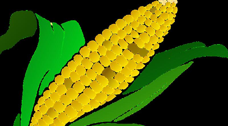 взять займ на карту Кукуруза
